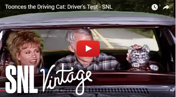 toonces the driving cat video still